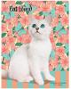 Дневник 5-11кл. 48л. 'Белый котенок и бабочки' матовая ламинрация Д48-1741 Проф-Пресс
