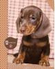 Дневник для 5-11 'Коричневый щенок' С3623-09